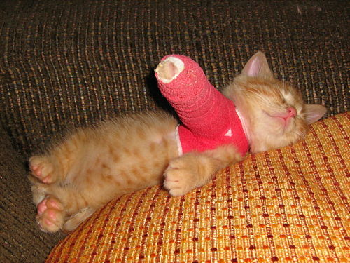 finances-insurance-broken-arm-kitten